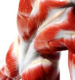 muskelvärk i låren